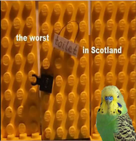 Budgie in the Cludgie